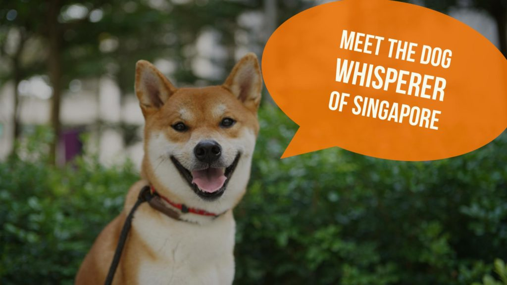 Meet the Dog Whisperer of Singapore