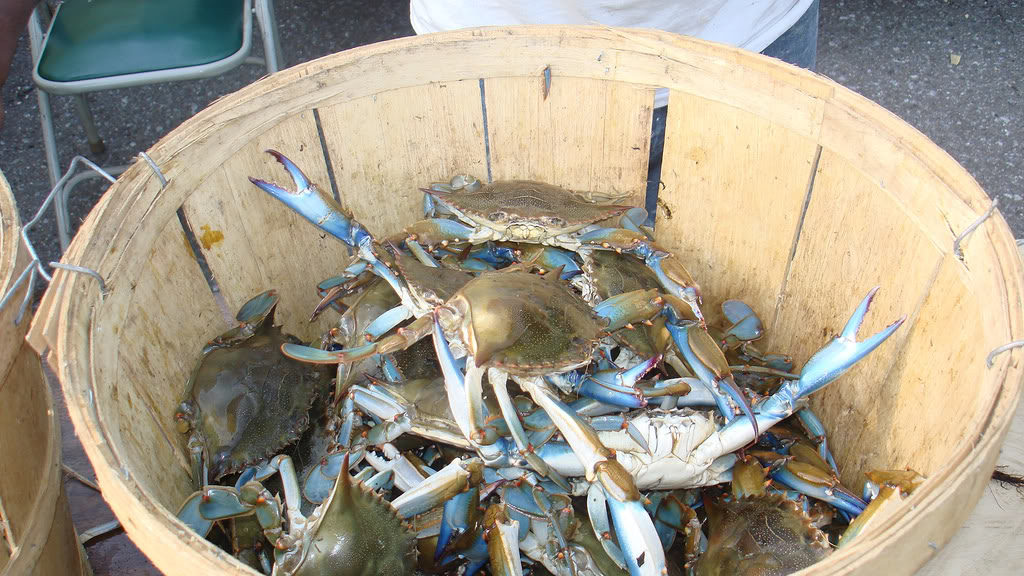 Crabs in a Bucket Story